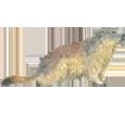 Marmotta ##STADE## - manto 69