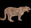 Puma ##STADE## - manto 2